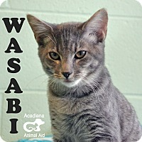 Adopt A Pet :: Wasabi - Carencro, LA
