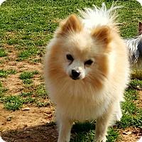 Adopt A Pet :: Cooper - Scottsboro, AL