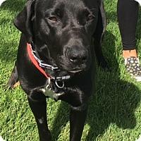 Adopt A Pet :: Issac - San Diego, CA