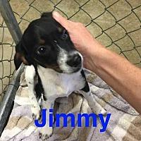 Adopt A Pet :: Jimmy - Foristell, MO