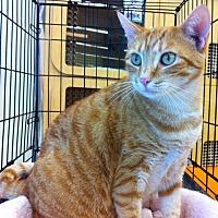 Adopt A Pet :: Starburst - Tampa, FL