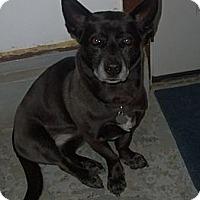 Adopt A Pet :: Zoe - Franklin, NH