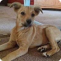 Adopt A Pet :: Troy - Seattle, WA