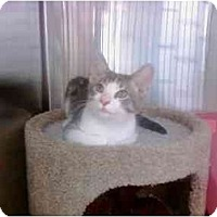 Adopt A Pet :: Celia - Greenville, SC
