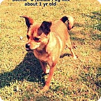 Adopt A Pet :: Bonita - Gadsden, AL