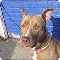 Adopt A Pet :: WINSTON - Dennis, MA
