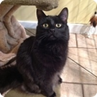 Adopt A Pet :: Frank - Vancouver, BC