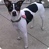 Adopt A Pet :: Quincy - Oberlin, OH