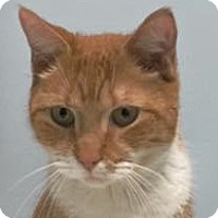 Adopt A Pet :: Squeeze - Chesterfield Township, MI