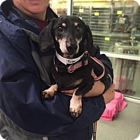 Adopt A Pet :: Rosie - Chesterfield, VA