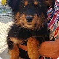 Adopt A Pet :: Xena- Adoption Pending - Temecula, CA