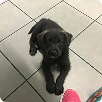 Adopt A Pet :: Elmer - San Diego, CA