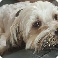 Adopt A Pet :: Oliver - Algonquin, IL