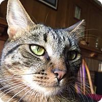 Adopt A Pet :: WATTS - Brea, CA