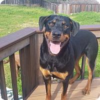 Adopt A Pet :: Achilles - San Martin, CA