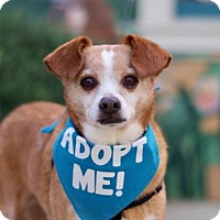 Adopt A Pet :: Hamilton - Pacific Grove, CA