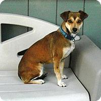 Adopt A Pet :: WINNIE - Auburn, CA