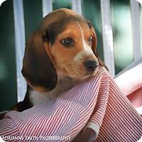 Adopt A Pet :: Fila - Fayetteville, GA