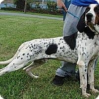 Adopt A Pet :: URGENT-BINGHAM - Providence, RI