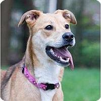 Adopt A Pet :: Sadie - PENDING! - kennebunkport, ME