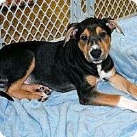 Adopt A Pet :: Andrew - Minneola, FL