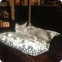 Adopt A Pet :: Charcoal - Seminole, FL