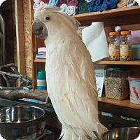 Adopt A Pet :: Austin - Lenexa, KS