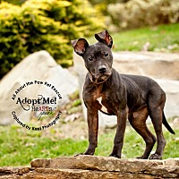 Adopt A Pet :: Joey - Mansfield, OH