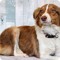 Adopt A Pet :: Bianca ADOPTION PENDING - Waldorf, MD