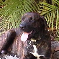 Adopt A Pet :: Chaz - Miami, FL