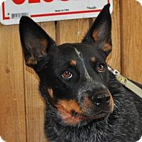 Adopt A Pet :: Vinnie - Prosser, WA