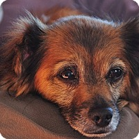 Adopt A Pet :: Gracie - St. Catharines, ON