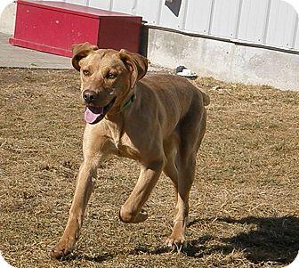 Labrador Retriever Mix Puppy for adoption in Meridian, Idaho - Moonlight