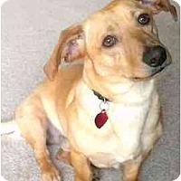 Adopt A Pet :: Rocky - Seattle, WA