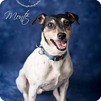 Adopt A Pet :: Monte - Burbank, CA