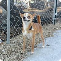 Adopt A Pet :: Teigen - Meridian, ID