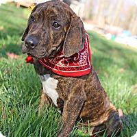 Adopt A Pet :: Moe - Plainfield, CT