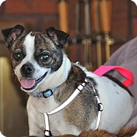 Adopt A Pet :: Macie - St. Catharines, ON