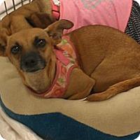 Adopt A Pet :: Maureen - Phoenix, AZ