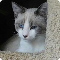 Adopt A Pet :: Monty - Davis, CA