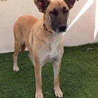 German Shepherd Dog Mix Dog for adoption in San Diego, California - Brenda