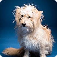 Adopt A Pet :: Travis - MEET ME - Norwalk, CT