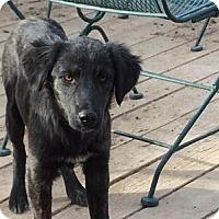 Adopt A Pet :: Niagara - Evergreen, CO