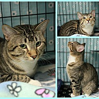 Adopt A Pet :: Malcom - New Richmond,, WI