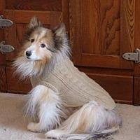 Sheltie, Shetland Sheepdog Dog for adoption in Shell Knob, Missouri - DOLLY