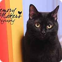 Adopt A Pet :: Maisy - Topeka, KS