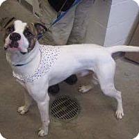 Adopt A Pet :: Frankie - Manhattan, KS