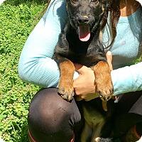 Adopt A Pet :: Dani - Groton, MA