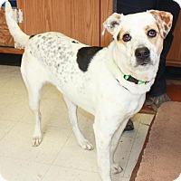 Adopt A Pet :: Heidi - Sparta, NJ