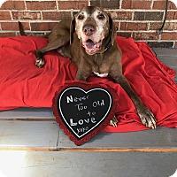 Adopt A Pet :: GUS - Sherman, CT